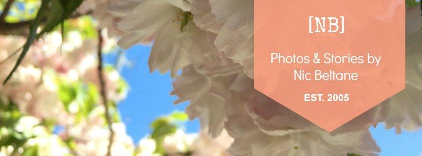 cropped-nb-header1.jpg